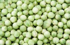 Auberginen der grünen Erbse Stockfotografie