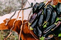 Auberginen in einem Eisenkorb auf dem Hintergrund des Rindleders Stockfotos