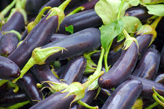 Aubergines Royalty Free Stock Image