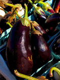 Aubergines Photo stock