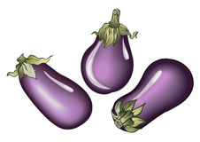 Aubergines. Three aubergines-vector realistic illustration for food designs Royalty Free Stock Photo