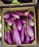 Aubergines asiatiques organiques Image stock