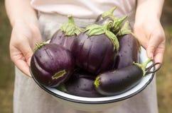 Aubergines in een kom Een vrouw houdt een kom aubergines in haar handen Stock Fotografie