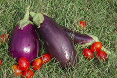 Aubergines et tomates Photo stock
