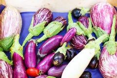 Aubergines fraîches, légumes d'aubergine sur le marché en plein air dans avéré Image stock
