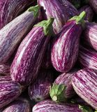 Aubergines in Murcia Spain Stock Images