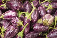 Stack of purple eggplant - Solanum melongena. Aubergines with popular vegetables in diets for their laxative properties Stock Photo