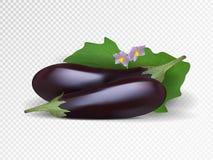 Aubergines pourpres fraîches à l'arrière-plan transparent illustatration violet d'aubergines de vecteur Photo-réaliste Images libres de droits