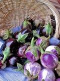 auberginevariation Royaltyfri Bild