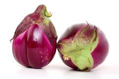 auberginewhite Royaltyfri Fotografi