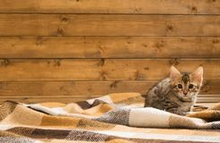 Auburn spotted kitten sitting on the floor in a blanket. Auburn spotted kitten sitting on the floor Royalty Free Stock Images