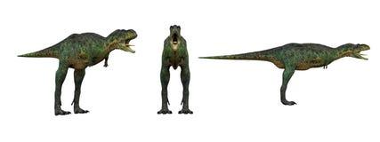 Aucasaurus Dinosaurieisolat på vit royaltyfri illustrationer