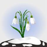 Auch im corel abgehobenen Betrag Frühlingsschneeglöckchenblumen auf einem Schnee Stockfoto