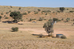 Auchterlonie waterhole, Kgalagadi Transfrontier Park Royalty Free Stock Photo