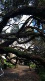 auckland Новая Зеландия Стоковое Изображение