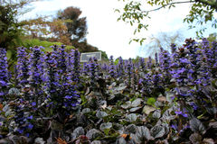 Auckland botanic garden. Is the most popular place for family day in Auckland City Stock Photos