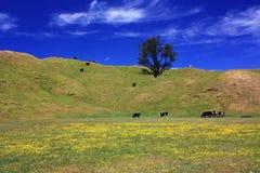 auckland góry wiosna czas Wellington Zdjęcie Royalty Free
