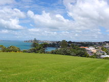 Auckland Grassland Royalty Free Stock Image