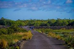 AUCKLAND, LA NOUVELLE ZÉLANDE 12 MAI 2017 : Un peuple non identifié marchant dans une route rocheuse à l'intérieur de l'île de Ra Photos stock