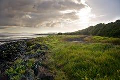 Auckland landskap Arkivbilder