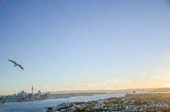 Auckland linia horyzontu Obraz Royalty Free