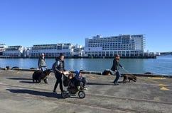 Auckland nabrzeże - Nowa Zelandia Fotografia Royalty Free