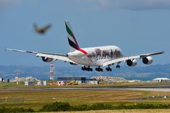 Emirates Airbus A380 super jumbo in United for Wildlife livery landing at Auckland International Airport. AUCKLAND, NEW ZEALAND - DECEMBER 17: Emirates Airbus Royalty Free Stock Photography
