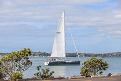 Auckland, New Zealand- December 10, 2013. Sailing boat in the We Stock Images