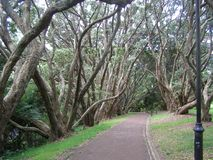 Auckland områdesträdgård Nya Zeeland Arkivfoto