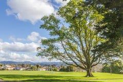 Auckland park, new zealand Royalty Free Stock Photo