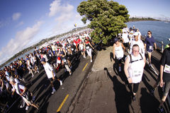 Auckland Round the bays fun run. Participants of Auckland Round the Bays,one of the world's largest fun-runs with an estimated 70,000 entrants, in Auckland, New Royalty Free Stock Image