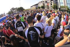 Auckland Run Walk Round the Bays Royalty Free Stock Image