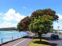Auckland Seaside Stock Image