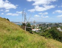Auckland skyline. With a tree at Mount Victoria Royalty Free Stock Photography