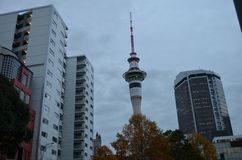 Auckland skytower in autumn royalty free stock photo
