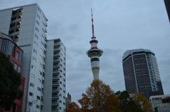 Auckland skytower i höst royaltyfri foto