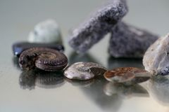 Auction of an ammonite more than millions Stock Photo