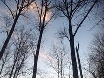 Aucune feuilles sur les arbres Images stock
