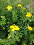 aucune fleur de nom photo libre de droits