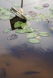 Aucune pêche dans un étang Image libre de droits