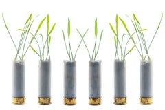 Aucune photo de concept de guerre Les pousses de l'herbe se développe hors du fusil de chasse de cartouche d'arme à feu Photographie stock libre de droits