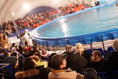 Audience in dolphinarium Stock Photos