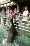 Audience and sea lions. Royalty Free Stock Photos