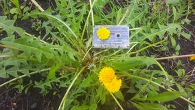 Audio tape the background of the dandelion.  royalty free stock photo