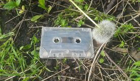 Audio tape the background of the dandelion.  royalty free stock photos