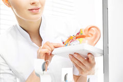 Audiologist, model van het oor royalty-vrije stock foto's