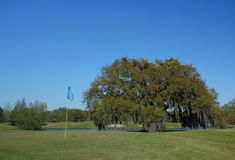 Audubon parkerar golfbanan i New Orleans arkivfoto