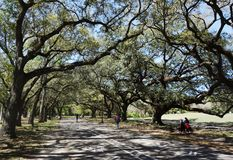Audubon parkerar i New Orleans arkivbilder