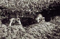 Auf dem überwachenden Kindsoldaten des Ausblickes Stockfotografie