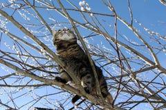 Auf dem Baum Stockfoto